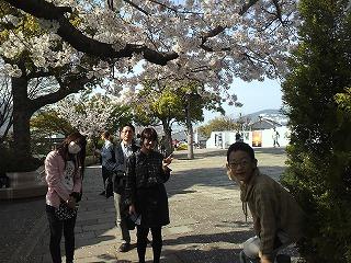 グラバー桜.jpg