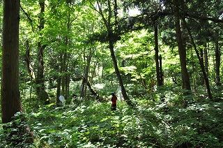 森の中のあみ.jpg