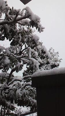積雪5cm.jpg